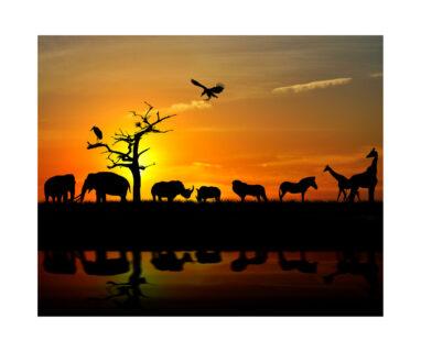 アフリカの諺に学ぶ目標達成のポイント